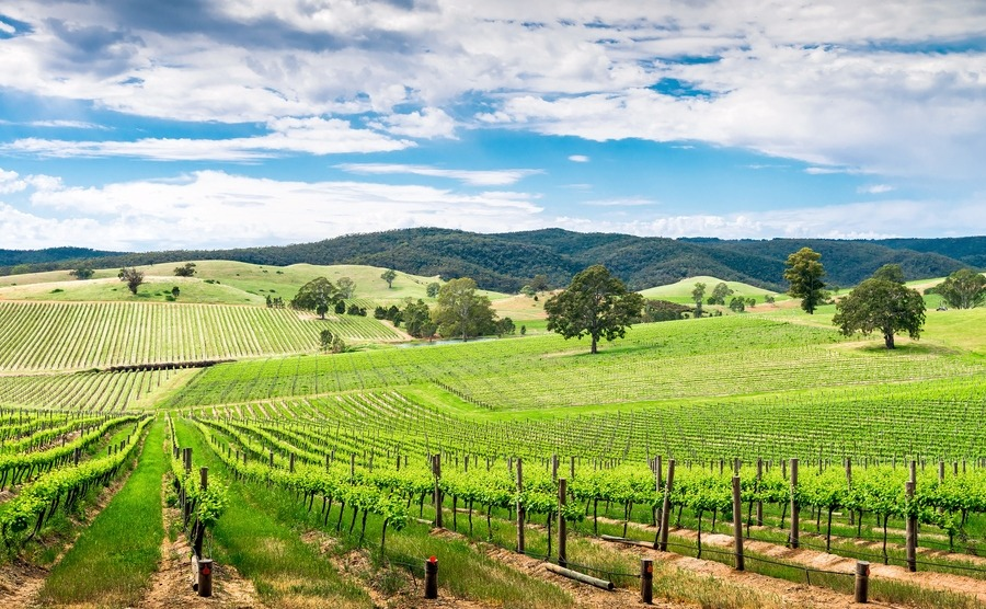 Picturesque wine valley in Barossa, South Australia