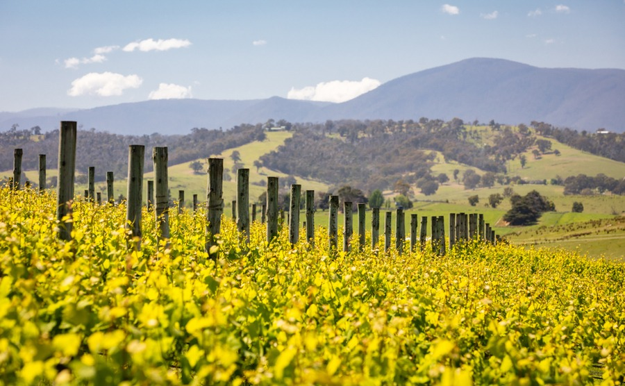The Yarra Valley is famous for its wine.