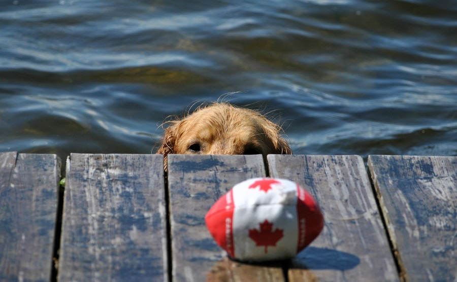 Can your pet move to Canada with you?