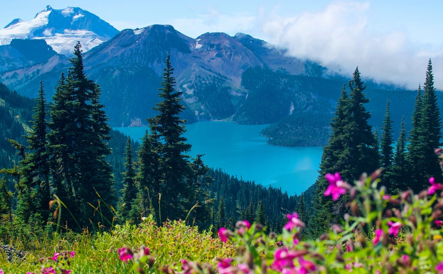 Turquoise water of Garibaldi Lake in Whistler, BC. As seen from blooming alpine meadows above.