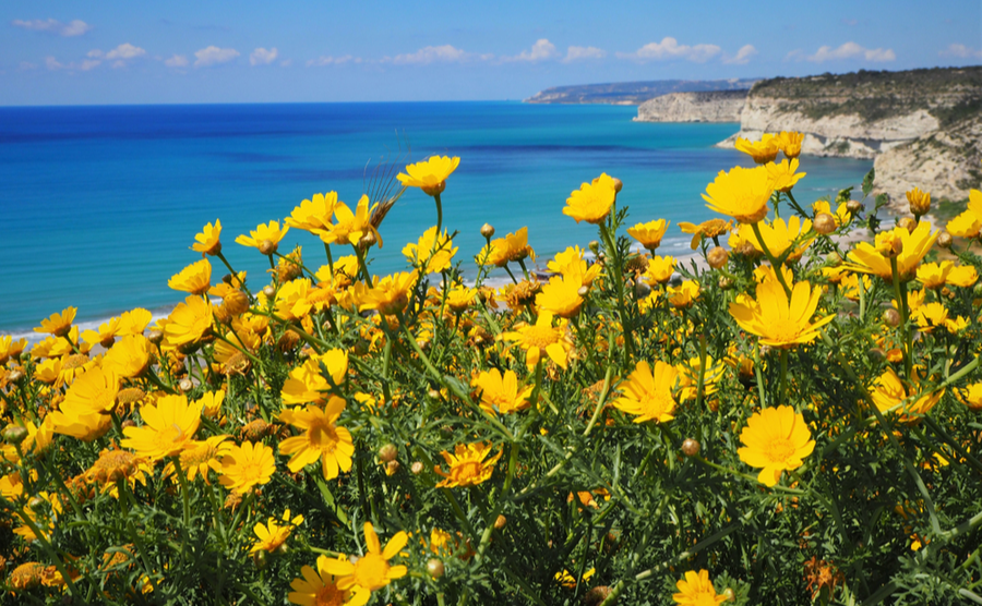 """An update from Cyprus: Spring and a """"new normal"""" holiday"""