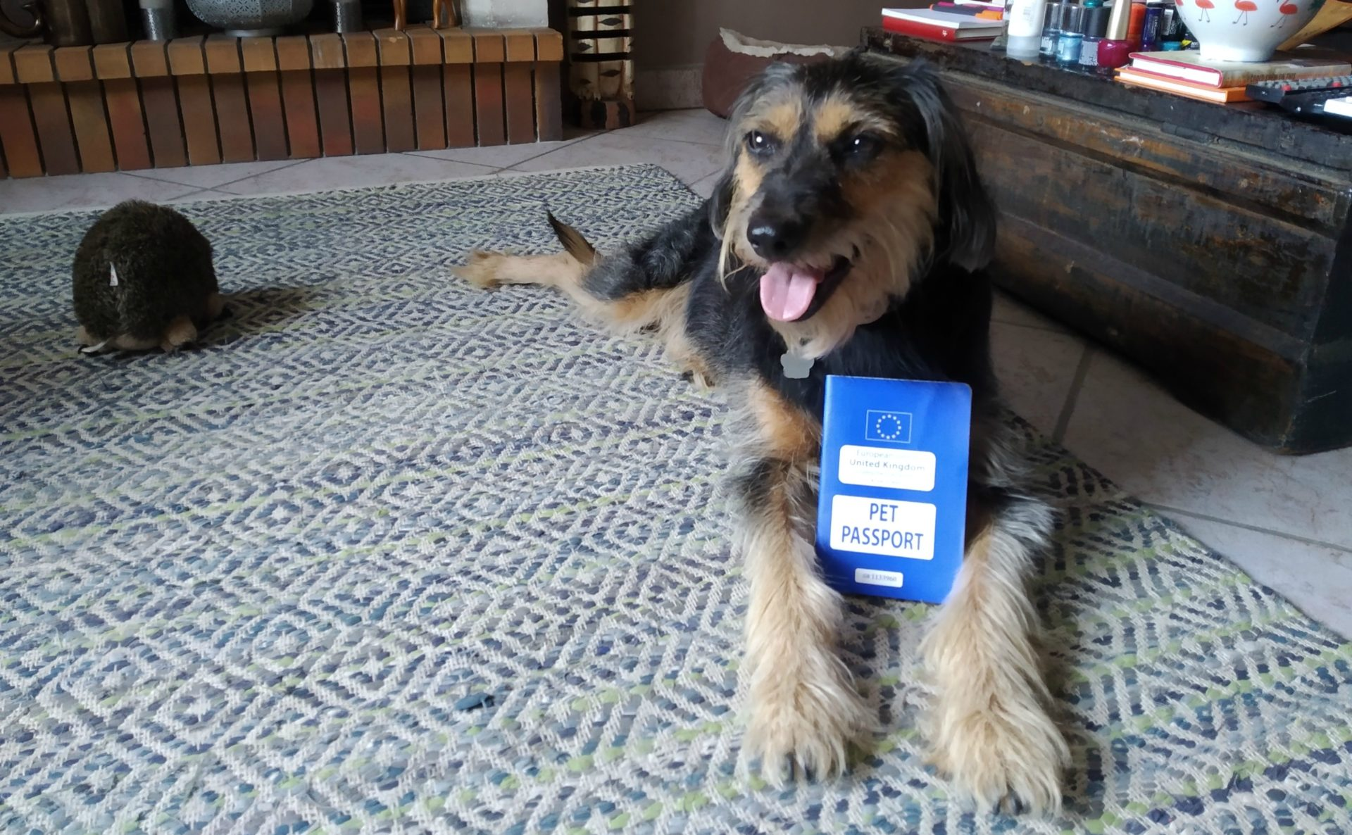 Have passport, will travel: writer Beth's dog Ruben proudly posing with his pet passport!