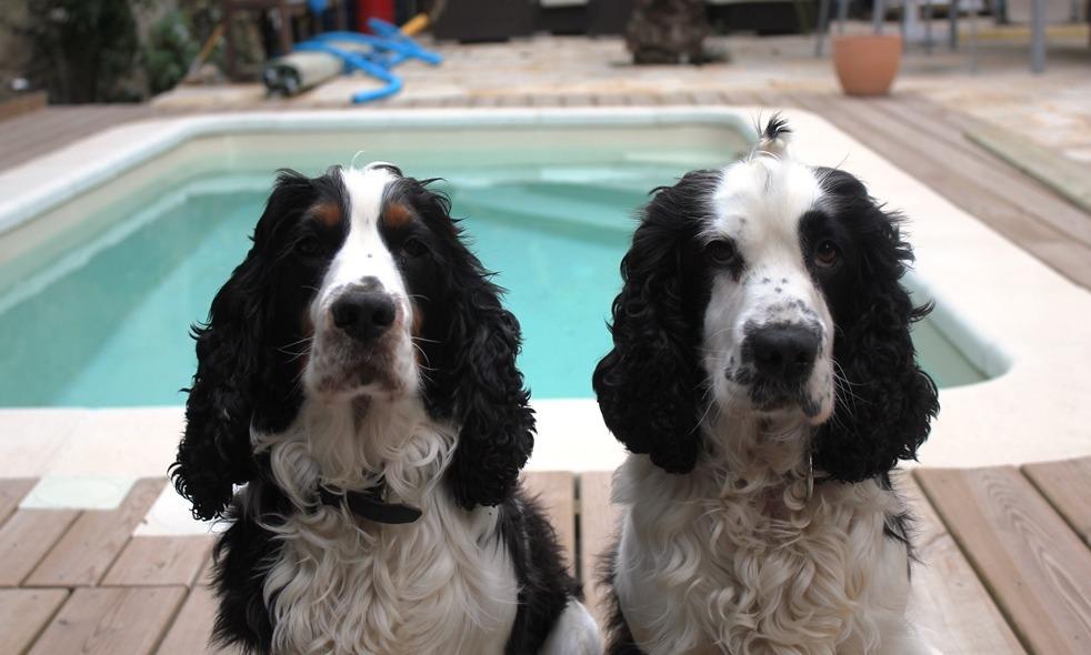 France - Alfie and Eddie by the pool