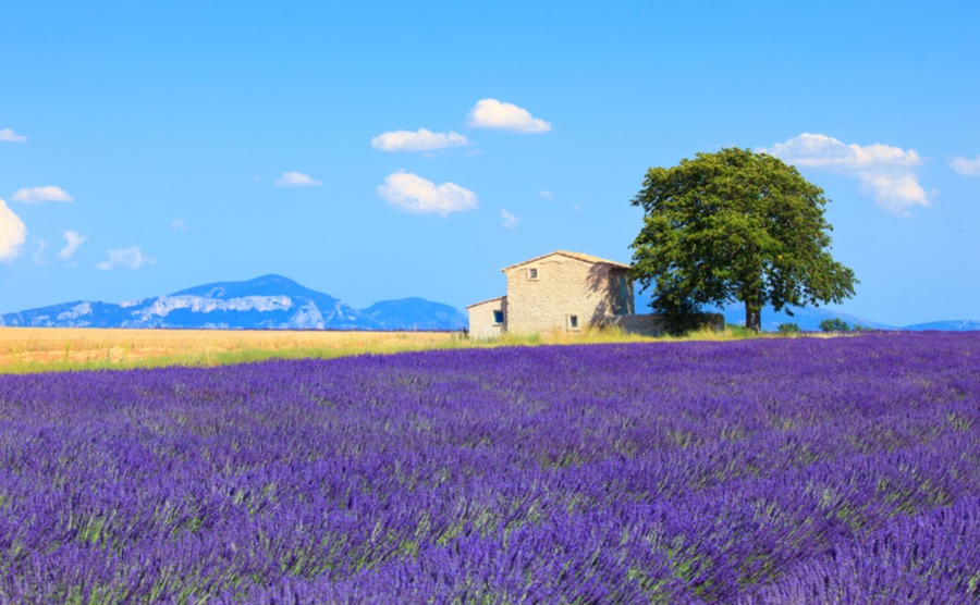 Negotiating is an important part of the house-buying process in France. Start off asking 10% below the buying price.