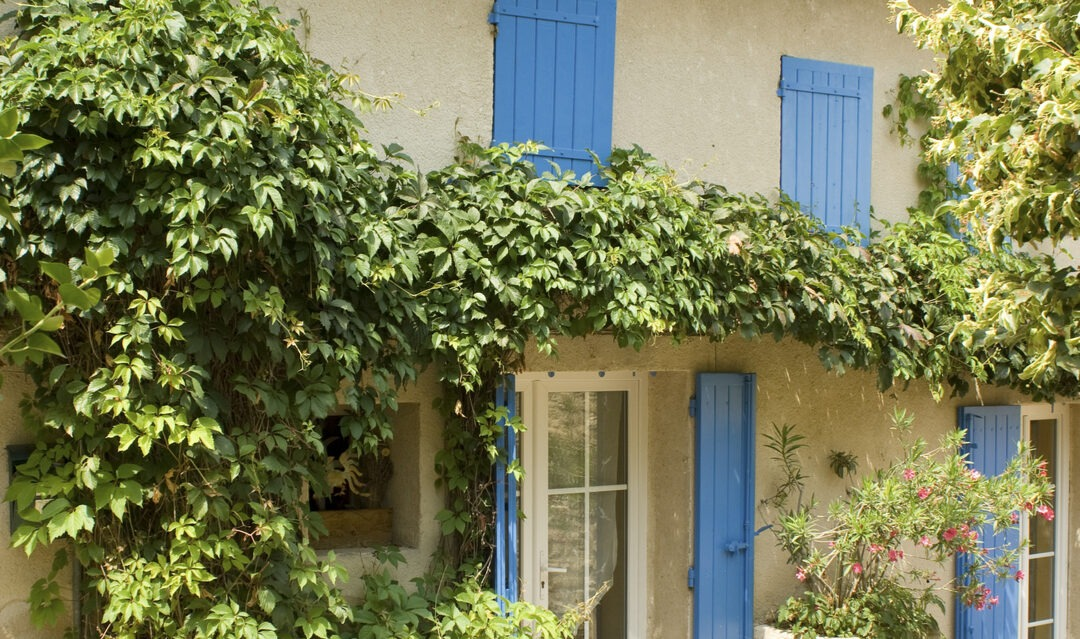 My magical new village life in the Charente