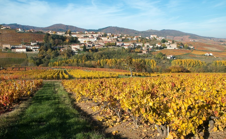 french-village-vineyard-with-autumn-colours-beaujolais