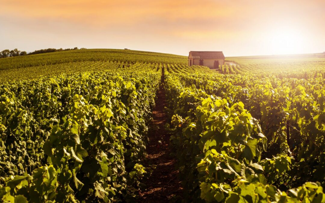 Why the Languedoc Roussillon is so popular