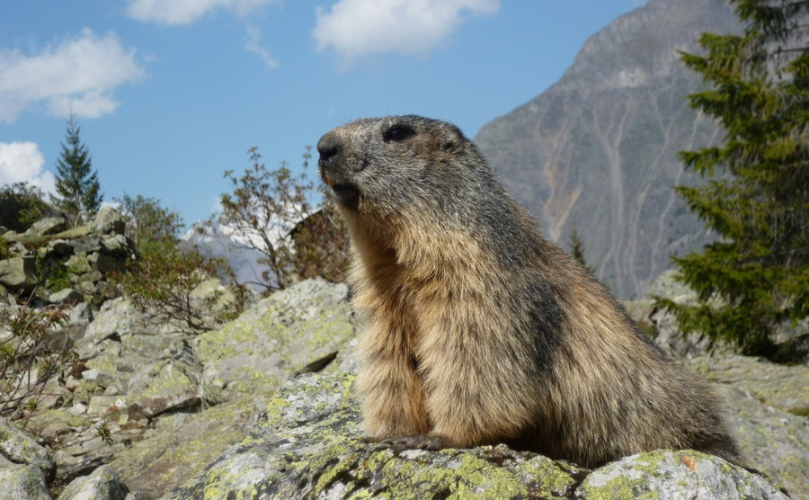 You'll find marmots in many parts of France, like this one in Lac de Lauvitel.