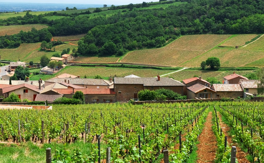 The cool red wines of Occitanie