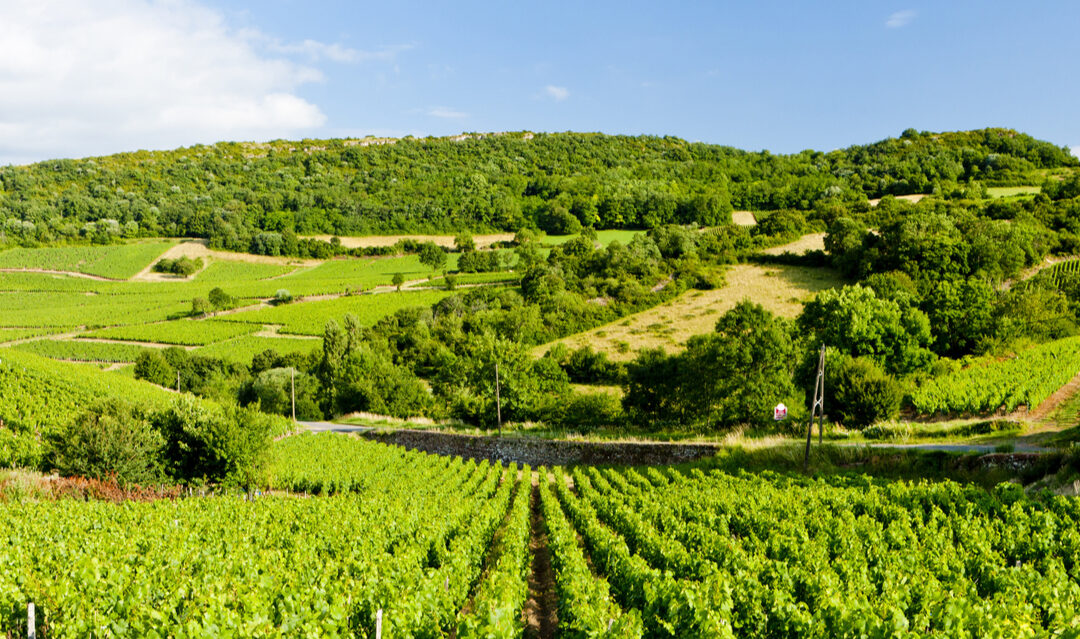 5 beautiful wine producing towns and villages