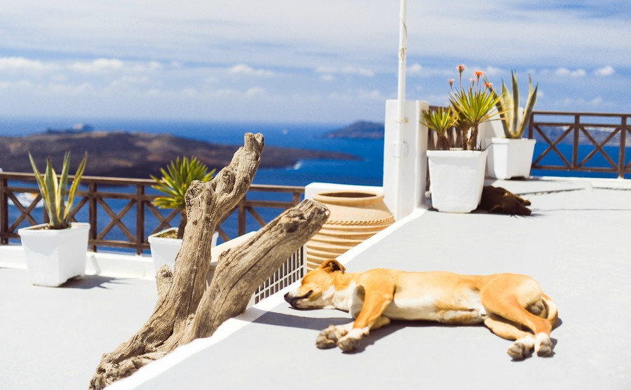 Should you take your dog to Greece?