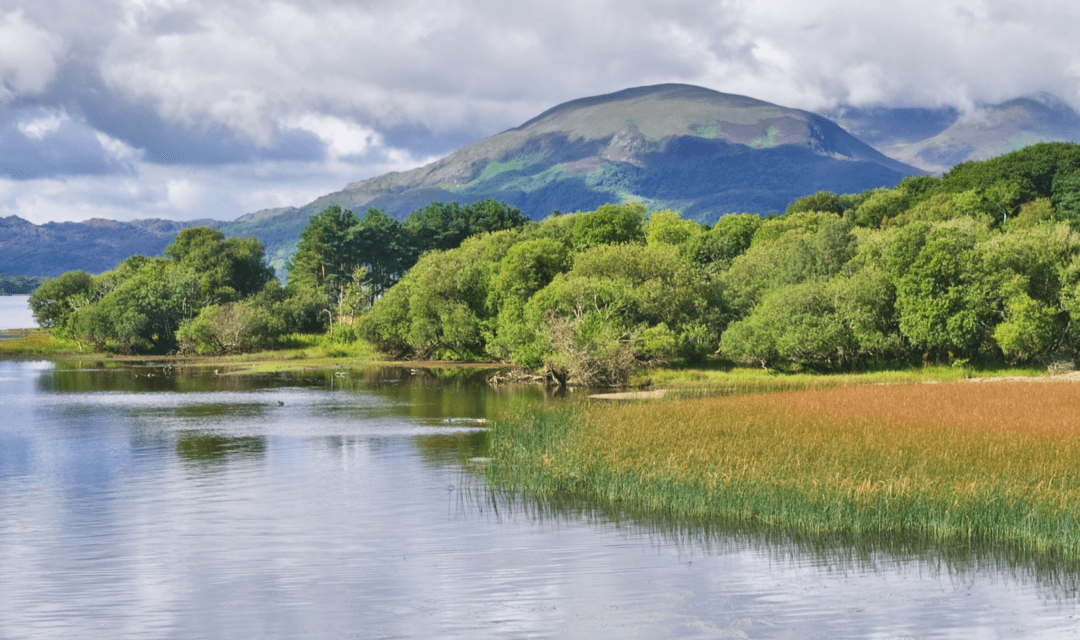 5 signs you should move to Ireland