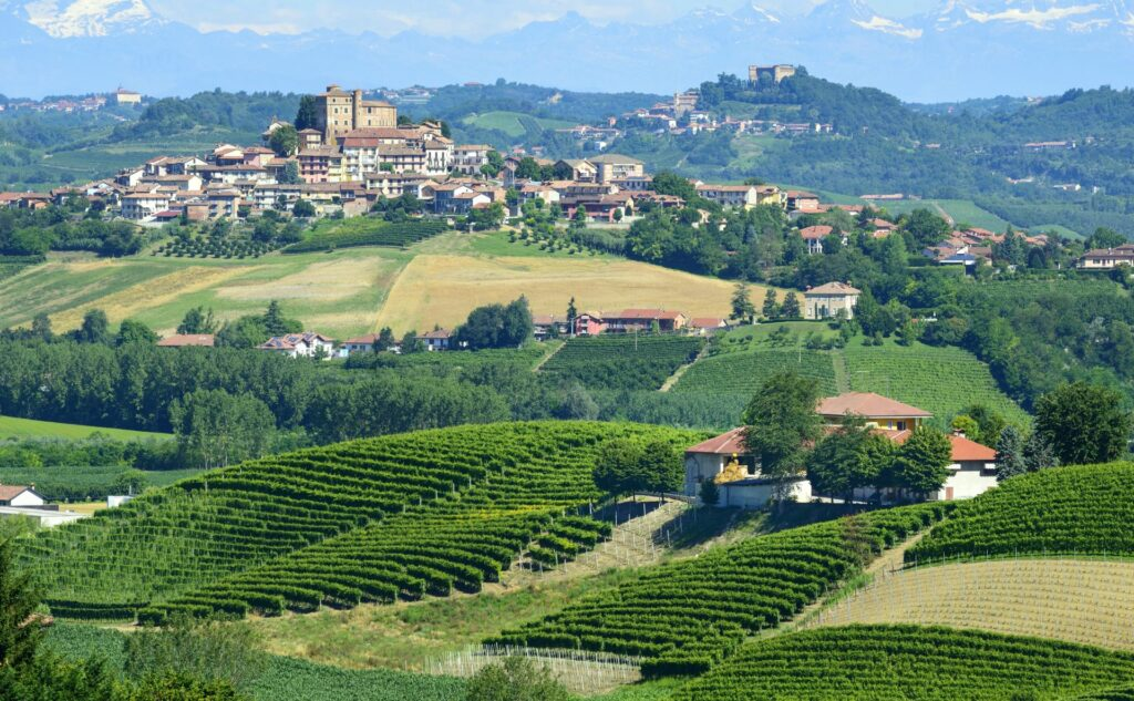 Italy-where-to-buy-PiedmontandValdAosta-Vineyard