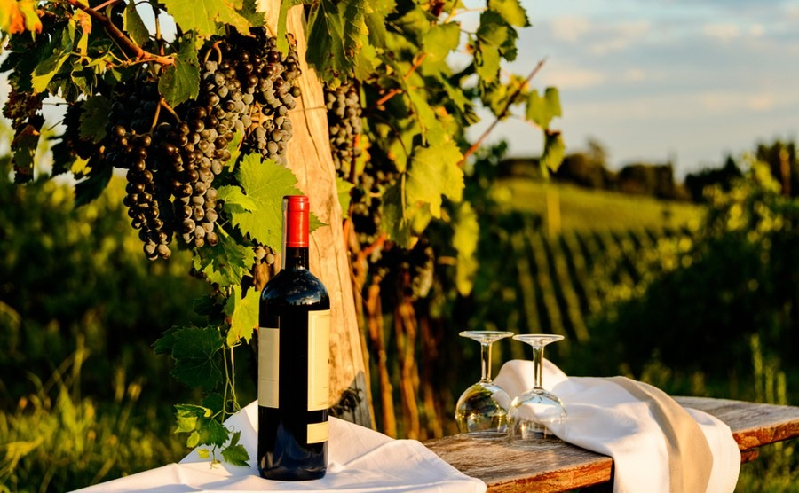 Winery in Chianti. Where to buy in Tuscany