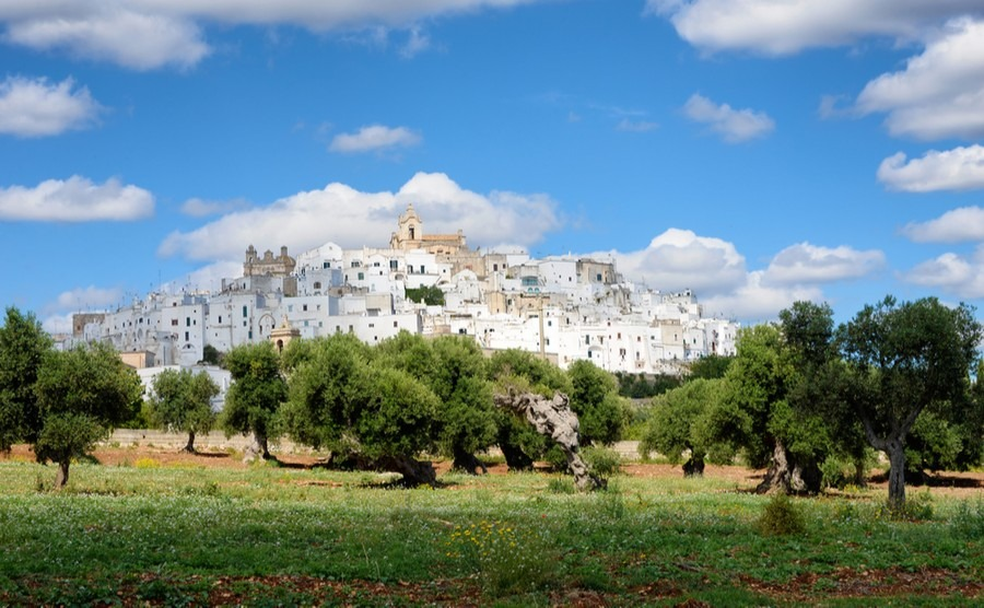 We feel so fortunate to be living in the Italian countryside among the olive trees and vineyards.
