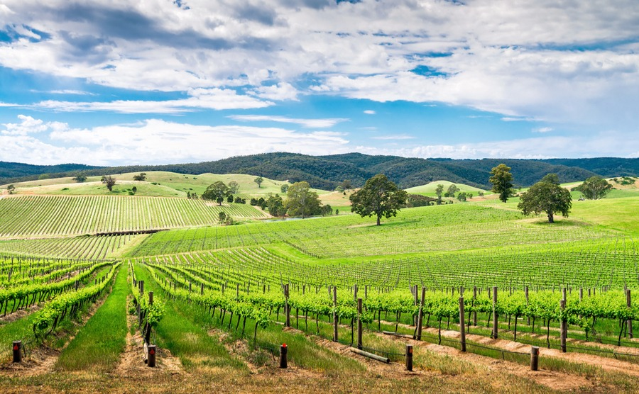 Adelaide is surrounded by beautiful wine country. It's a great choice for those deciding where to buy in France!