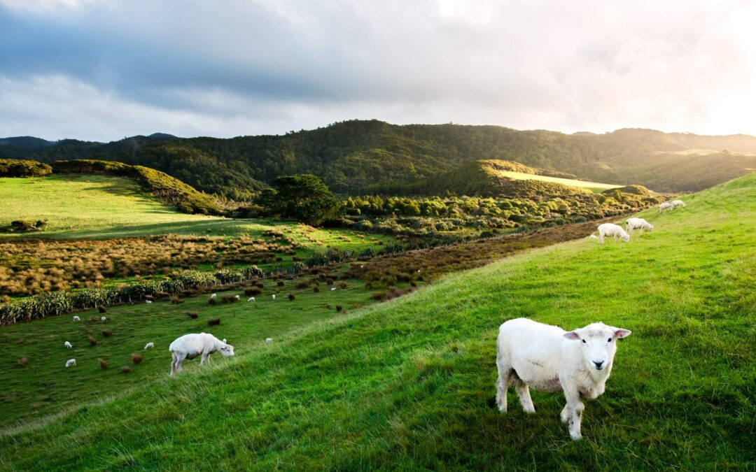 How to make a living in New Zealand
