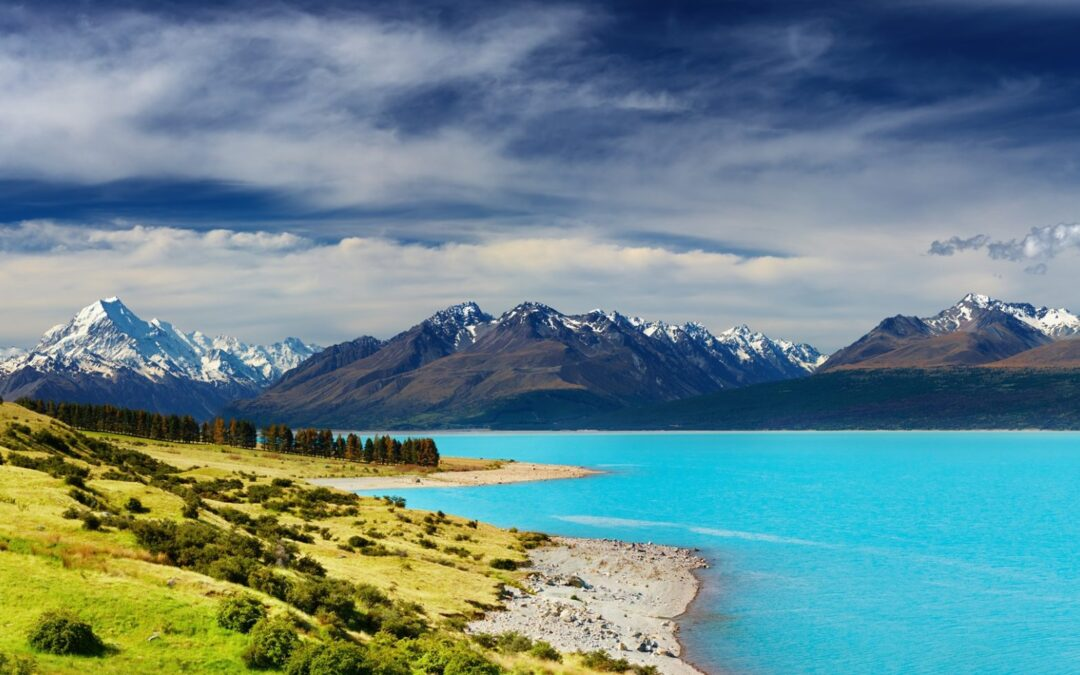 Buying in New Zealand on a budget