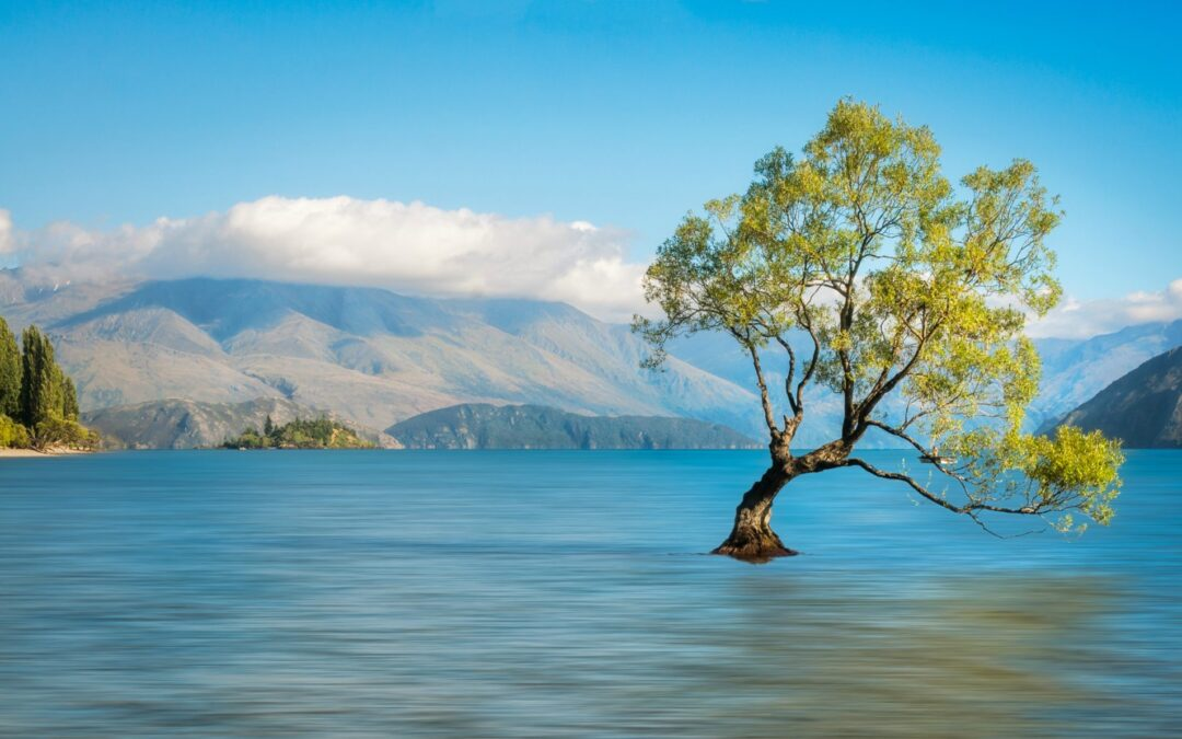 Where will I find the cheapest homes in New Zealand?