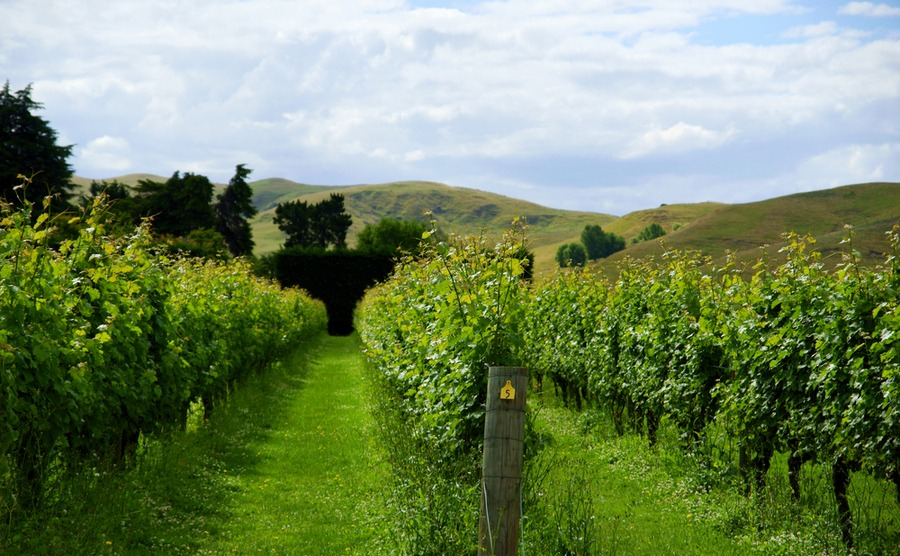 Discover Hawke's Bay