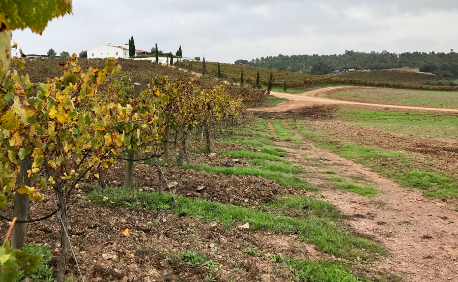 The Alentejo is rich in farms and vineyards.