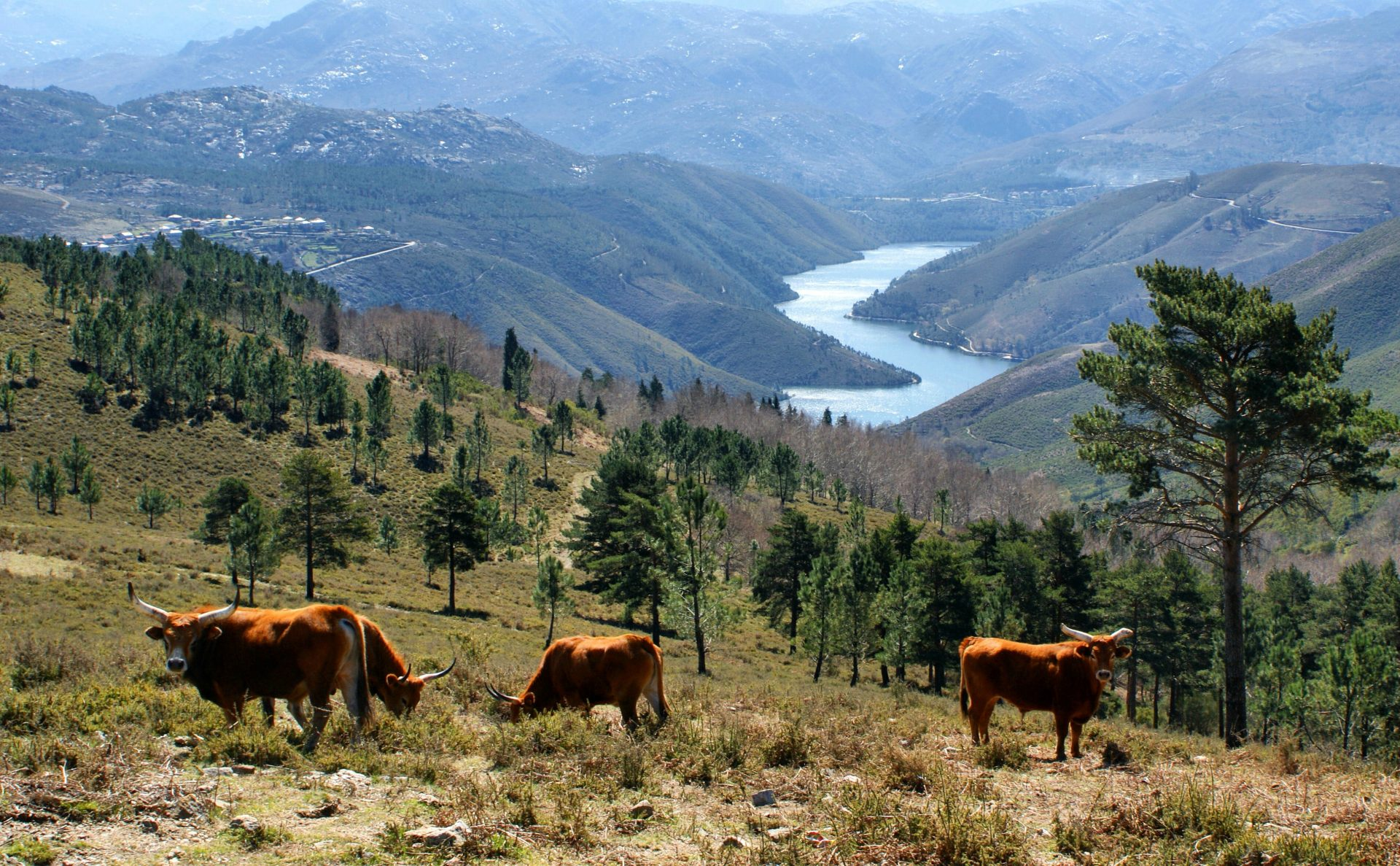 You could be a cattle rancher in Portugal, says National Park