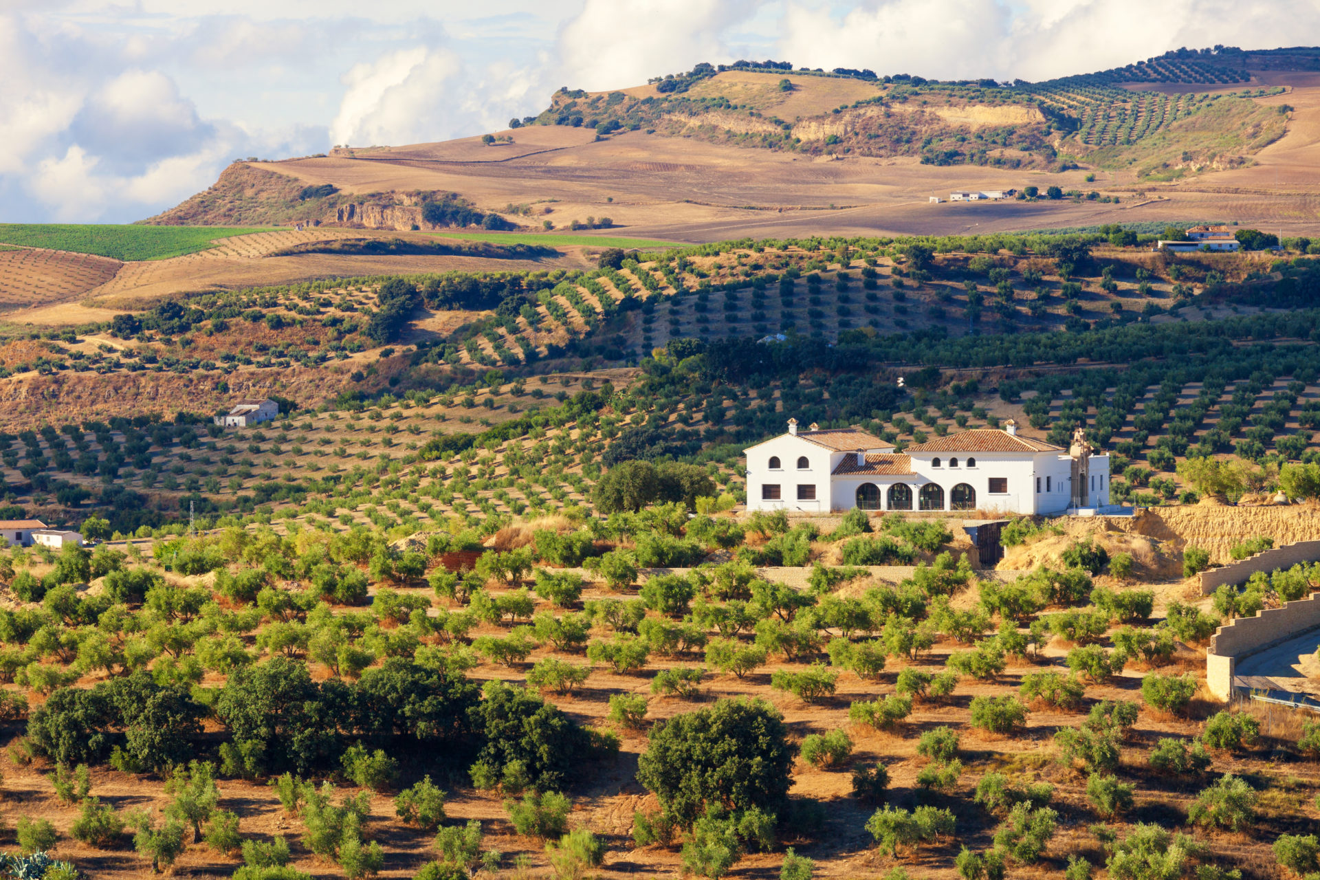 A farmhouse in Andalusia surrounded by olive trees