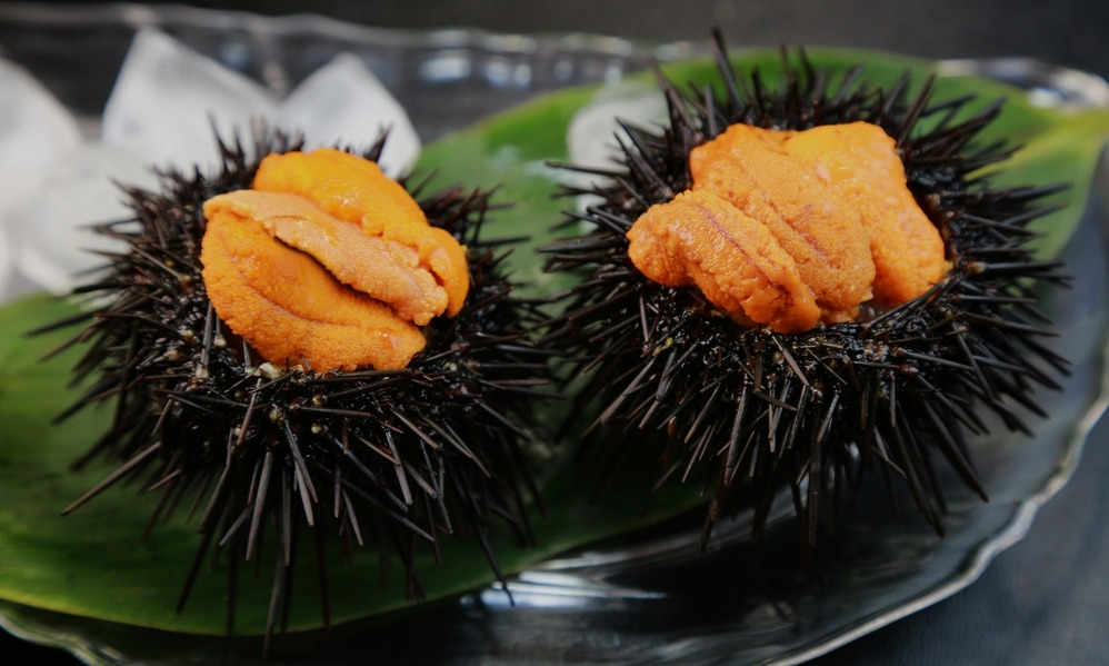 News - Sea Urchins