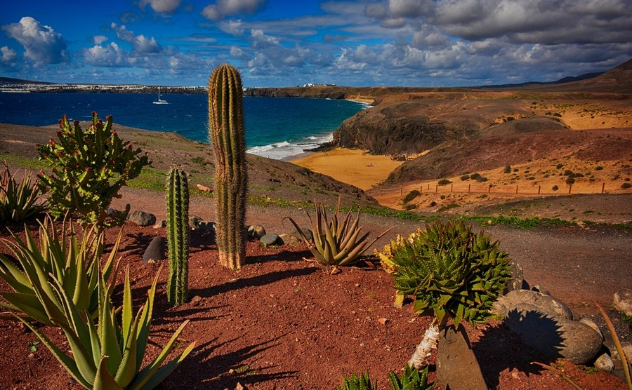 Among the Canary Islands, Lanzarote perhaps has the most unusual landscape.