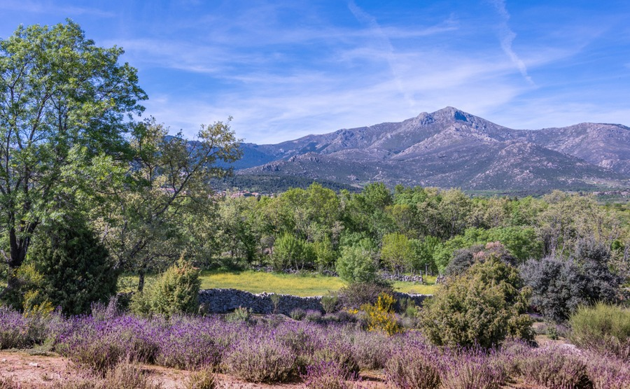 Building your own home in Spain, part 1: Buying the Land