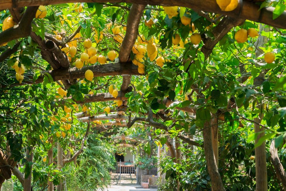 Planting your garden in Turkey
