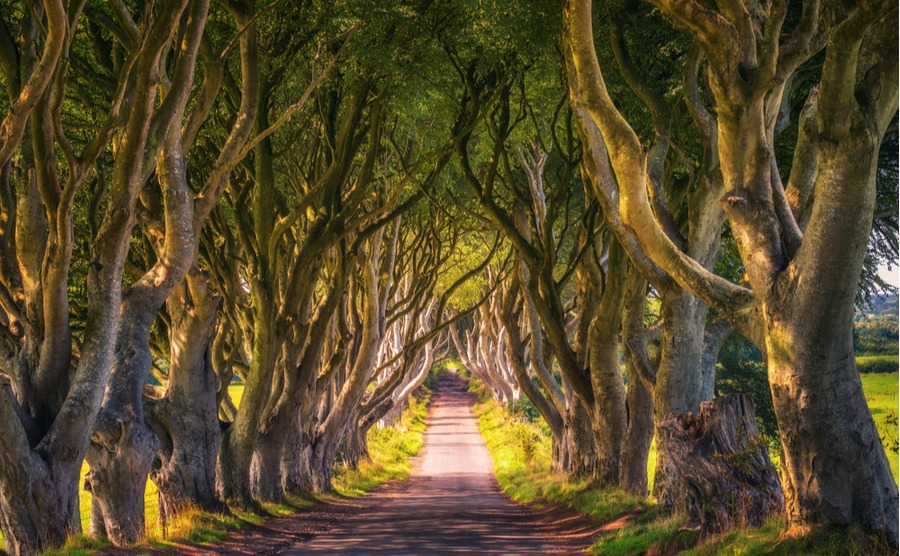 Northern Ireland. Home of Thrones