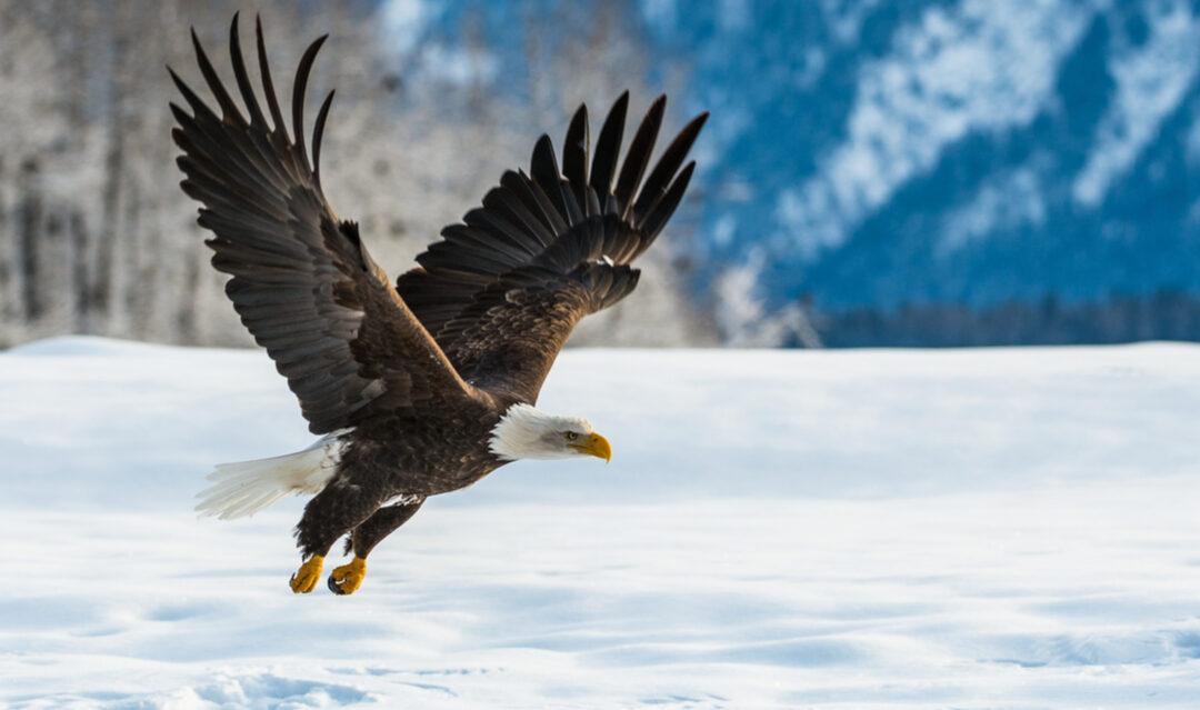 Wilder weekends: exploring the US's wildlife