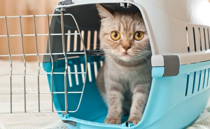 Living-Transporting pet