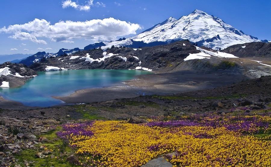 wildflowers-blooming-on-mount-baker-mount-baker-summer-bloom